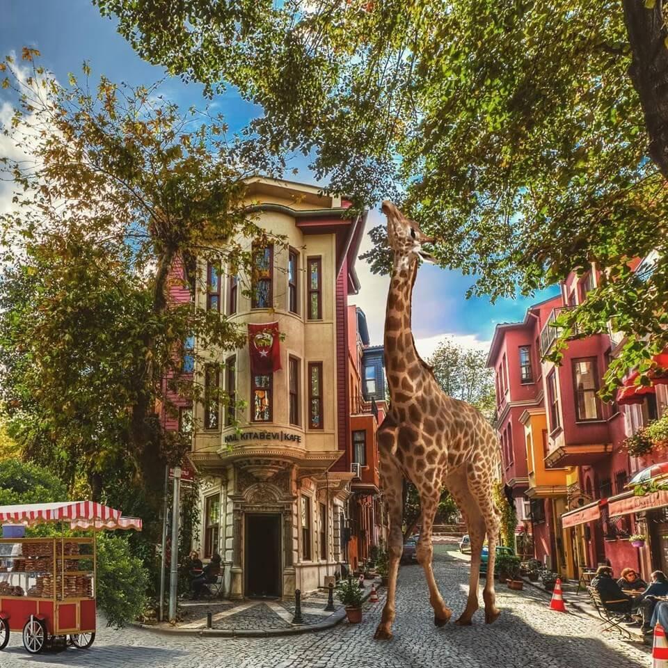 Yasin Yaman ile Bir İstanbul Masalı