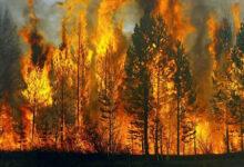 Photo of AKUT Uyarıyor! Orman Yangını ile Karşılaşınca Yapmamız Gerekenler…